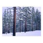 LAKE TAHOE STATE PARK, NEVADA. USA. Fresh snow Postcard