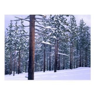 LAKE TAHOE STATE PARK, NEVADA. USA. Fresh snow Postcards