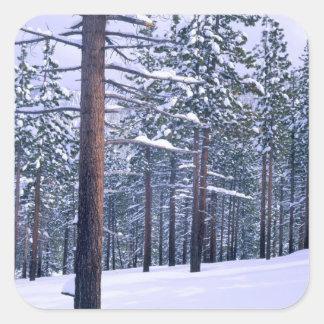 LAKE TAHOE STATE PARK, NEVADA. USA. Fresh snow Square Sticker