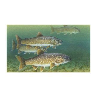Lake Trout Painting Canvas Print