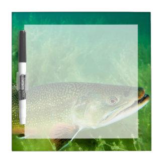 Lake Trout Portrait, Emerald Lake, Montana Dry Erase Board