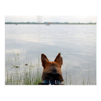 LAKE WATCH DOG POSTCARD