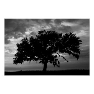 Lakefront Live Oak Print