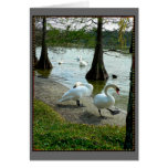 Lakeland Swans Greeting Card