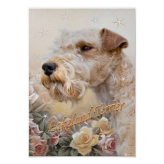 Lakeland Terrier Among Roses prints Poster
