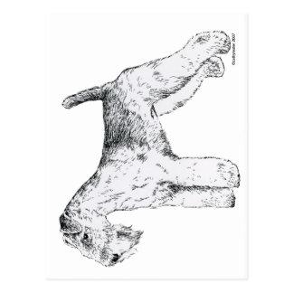 Lakeland Terrier Postcard