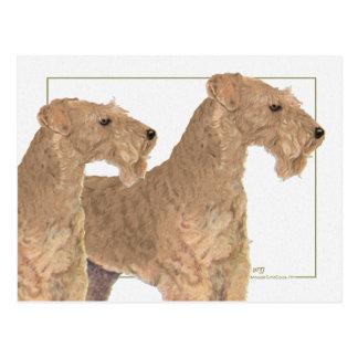 Lakeland Terriers Postcard