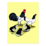 Lakenvelder Chicken Family Post Cards