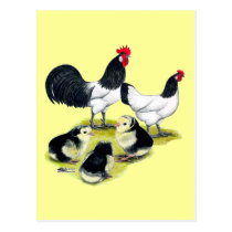Lakenvelder Chicken Family Postcard
