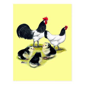 Lakenvelder Chicken Family Postcard