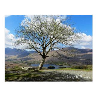 Lakes of Killarney postcard