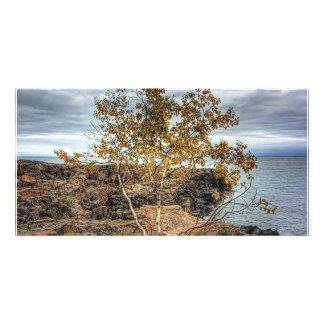 Lakeshore Tree Photo Greeting Card
