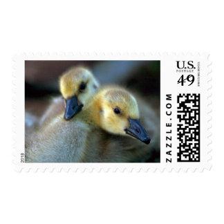 Lakeside Postage
