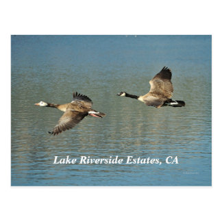 Lakw Riverside Estates, CA Postcard