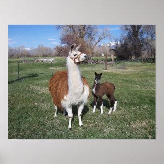 Lama Mama and Llama Baby Poster