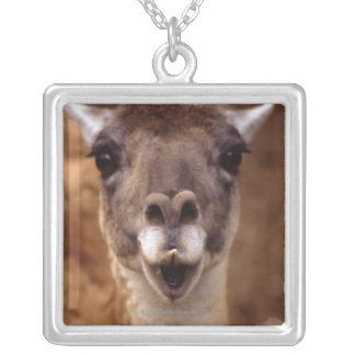 lama silver plated necklace