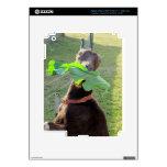 Lamancha Goat iPad 3 Decals