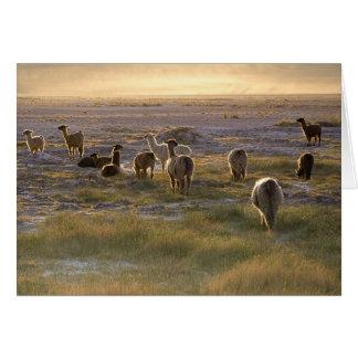 Lamas en la puesta del sol tarjeta de felicitación