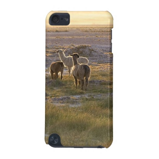Lamas in the Sunset iPod Touch (5th Generation) Case