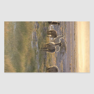 Lamas in the Sunset Rectangular Sticker