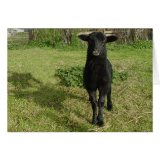 Lamb 2012 - Jilly Card