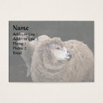 Lamb and Sheep Business Card
