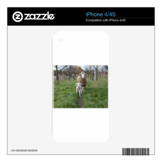Lamb and sheep iPhone 4 decals