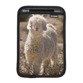 Lamb, Baviaans River Valley, Bedford iPad Mini Sleeve