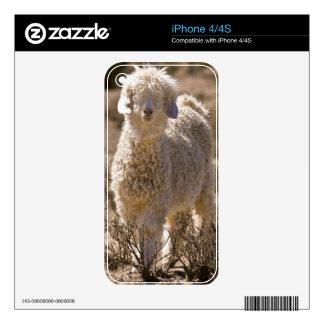 Lamb, Baviaans River Valley, Bedford iPhone 4 Decals