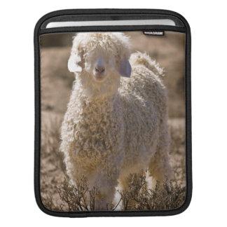 Lamb, Baviaans River Valley, Bedford Sleeve For iPads