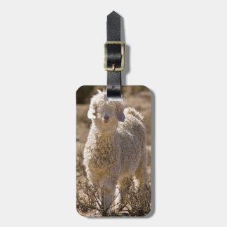 Lamb, Baviaans River Valley, Bedford Tag For Luggage