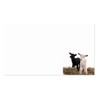 Lamb Business Card