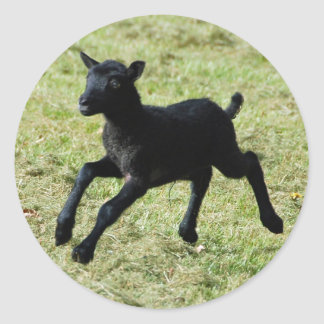 Lamb from Gotland sheep stickers