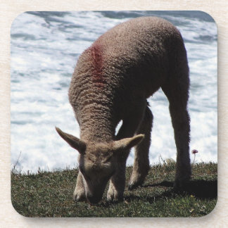 Lamb Grazeing On Wild Coastline Coaster