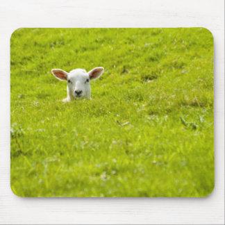 lamb in a dip mouse pad