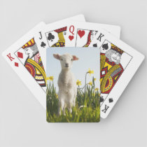 Lamb in a Field of Flowers Playing Cards