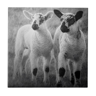 Lamb in spring ceramic tile