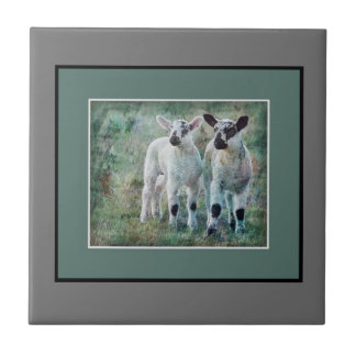 Lamb in spring tile