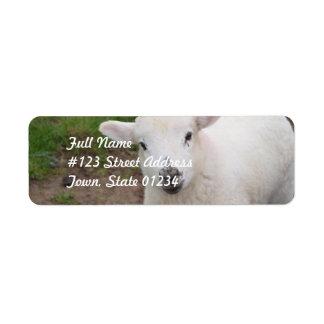 Lamb Labels