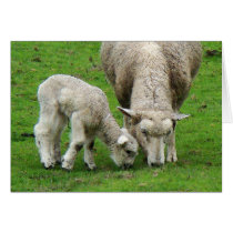 Lamb & Mama Sheep Card