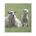 Lamb Memo Pad