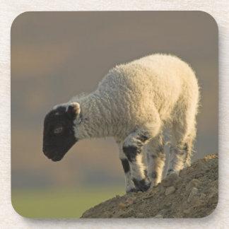 Lamb on a Hilltop Coaster set of 6