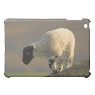 Lamb on a Hilltop iPad Case