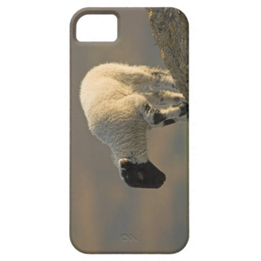 Lamb on a Hilltop iPhone 5 Case-Mate Barely