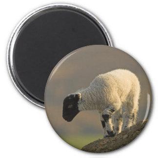Lamb on a Hilltop Magnet