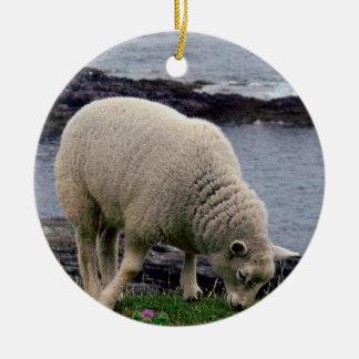 Lamb on remote wild south Devon coastline. Double-Sided Ceramic Round Christmas Ornament