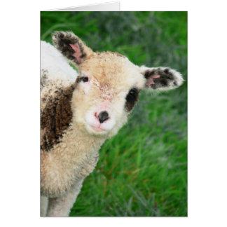 Lamb Pops In Card