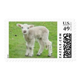Lamb Postage