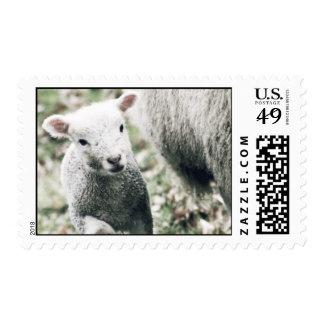 lamb postage stamp