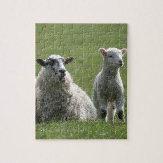 Lamb Puzzle